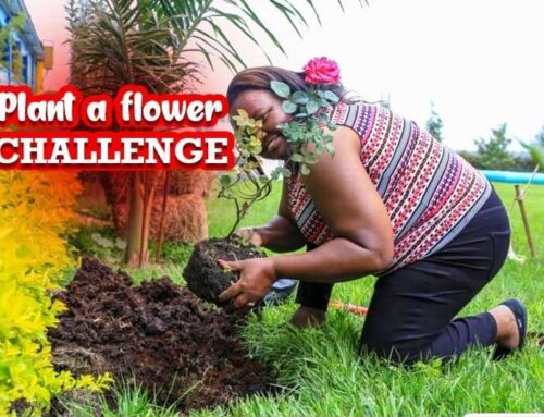 Flowers and how they help the Environment